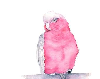 Galah watercolour painting, G11316, A4 size, Galah print, parrot watercolor painting, Australian bird watercolour, parrot painting