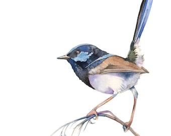 Fairy Wren print, Fairy wren watercolour painting, Fairy wren painting, Australian bird art, FW15916, A4 size, bird watercolor painting