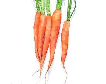 Carrots print, carrot print, carrots watercolor, A4 size, C16116, vegetable print, vegetable watercolor, kitchen wall art.