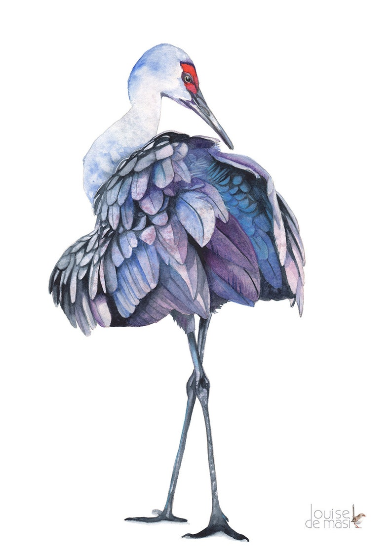 Sandhill Crane Print Of Watercolour Painting 5 By 7 Size