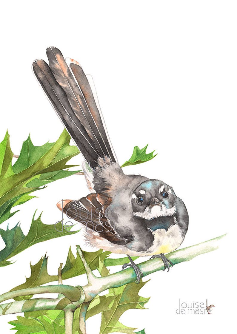 8682b599822 Grey Fantail print of watercolour painting 5 by 7 size