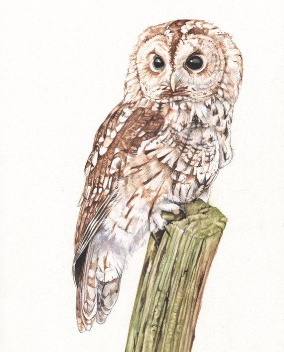 Tawny owl Print of watercolour painting 5 by 7 print - TO4815, bird art, wall art, home decor, wildlife art wall art print - bird art print