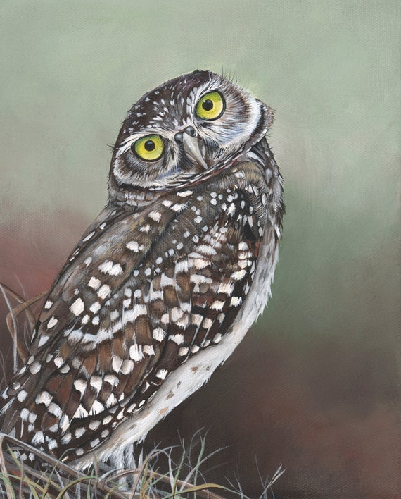 Owl Painting - bird watercolor print 2014-   Print of Watercolor Painting 5 by 7 print, bird art, wall art, home decor