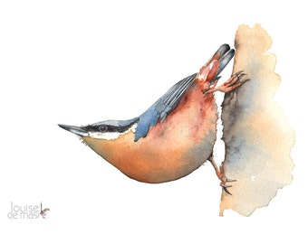 Nuthatch Print, Nuthatch watercolour painting print, Nuthatch watercolor painting, A3 size, N17817, Bird watercolour painting print