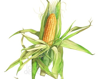 Corn print, corn painting, ear of corn print, corn watercolor, C15416, 5 by 7 print, vegetable watercolor, vegetable painting, vegetable art