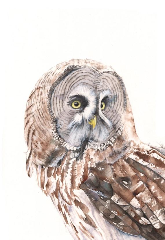 Great Grey Owl print of watercolour painting GO3715  A3 size largest print wall art print - bird art print