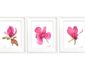 Magnolia Print set of three, A4 size, M18417, Magnolia watercolour painting print set, Magnolia watercolor print set, Botanical art