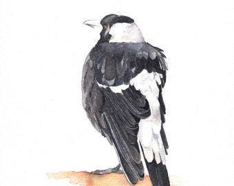 Magpie Painting - Bird wildlife nature art-  Print of watercolor painting 5 by 7 print, bird art, wall art, home decor