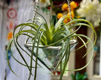 Hanging Air Plant Holder Triangle Pyramid Planter Stained Glass Clear Lead Free Terrarium Suncatcher