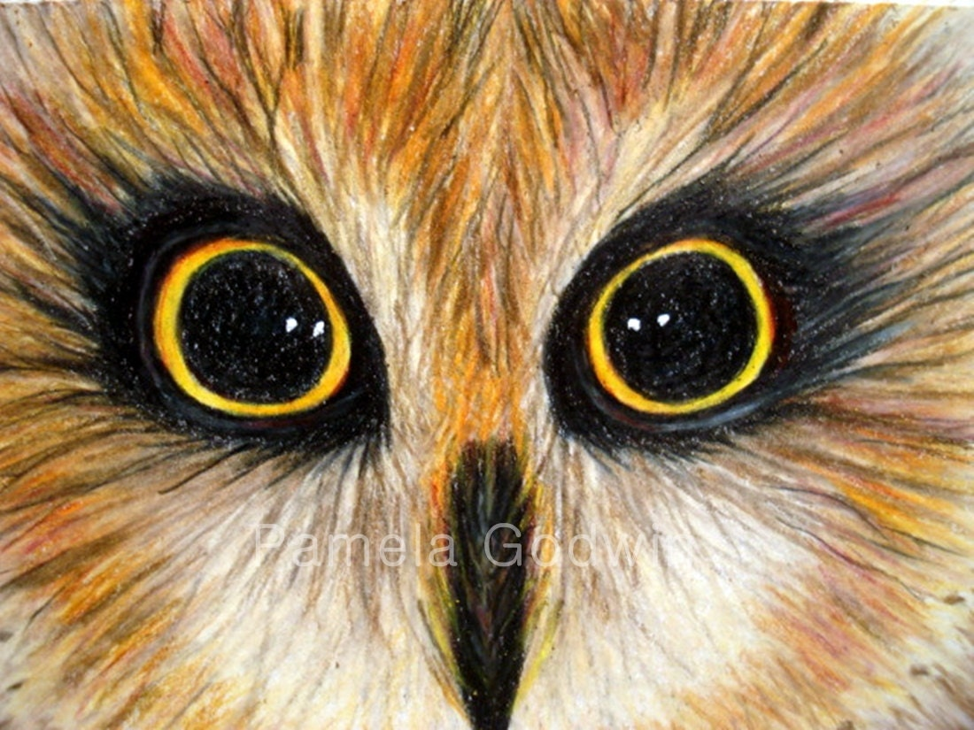 "Owl Bird ACEO Print 2.5"" x 3.5"" ""I Have The Hoots For You"""