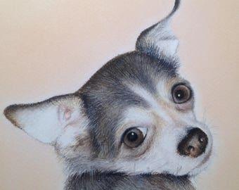 CUSTOM PET Portrait, Soft Pastel Portrait, Cat, Dog Portrait, Animal Portrait, Custom Pet Portrait, Different sizes Available