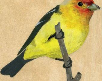 """Reproduction of original """"Western Tanager"""" painting"""