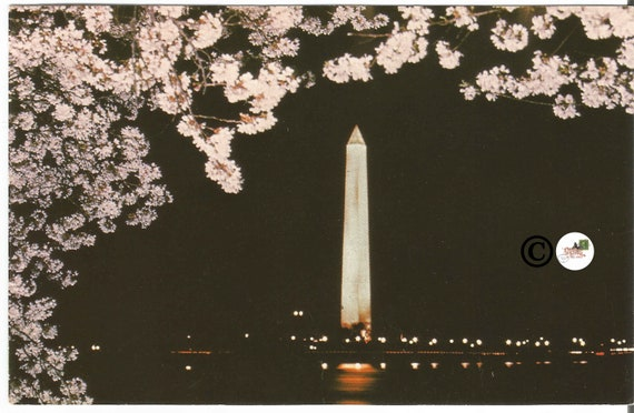 Vintage Postcard Night Scene of Washington Monument in Moonlight Framed by Pink Cherry Blossoms Washington D.C.