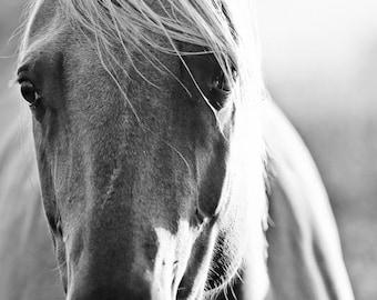 Horse Photography, Black and White Horse Photo