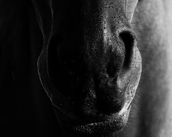 Horse Photography Black and White Abstract Square