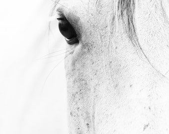 Horse Art Photography Black and White Horse Canvas