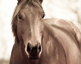 Horse Photography Sepia Horse Photograph