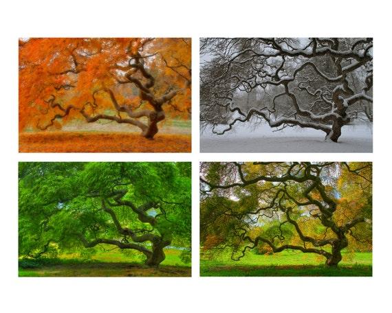 Four Seasons Print Set Landscape Photograph Japanese Maple Etsy