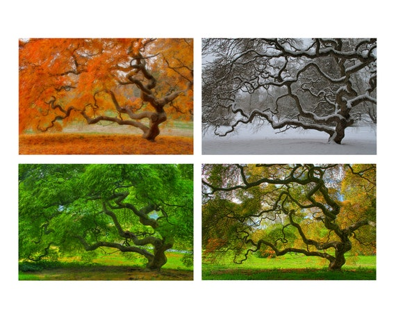 image 0 - 4X6 Print Set Four Seasons Landscape Photography Tree Of Life Etsy