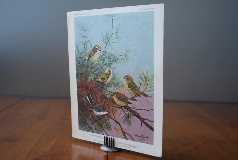 Ornithology Avain GNATCATCHERS and KINGLETS frameable art vintage bird book plate ephemera