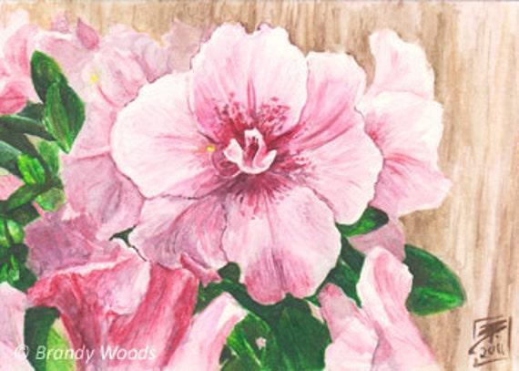 Pretty white Magnolia Flowers Bloom ACEO sfa art drawing print Brandy Woods