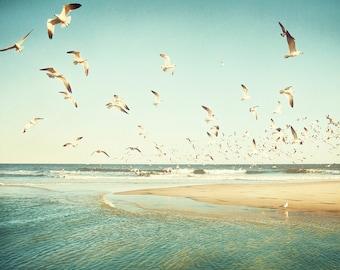 Coastal Photography, Modern Beach Art Print, Ocean Wall Art, Beach House Decor, Seagull Birds, Beachhouse Wall Art, Seascape Photography