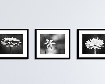 Black and White Flower Photography Set, Three Floral Prints, 11x14, 8x10, 5x7, 3 dark grey gray modern photographs neutral wall art photos