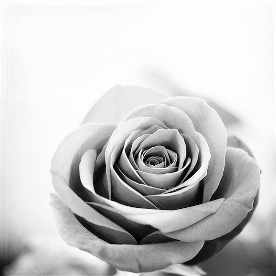 Black And White Rose Print Grey Flower Photography Gray Etsy