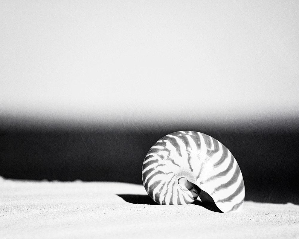 Black and white seashell photography beach print sea shell nautilus wall art grey gray seashore photo modern 8x10 photograph stripes