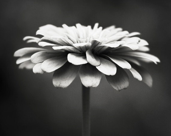 Black and white photography floral photography flower etsy image 0 mightylinksfo