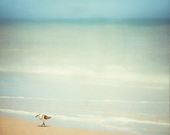 Beach Photography - sandpiper bird wall print light blue white cottage ocean photography beige seashore sea shore - 8x8, 12x12 Photograph
