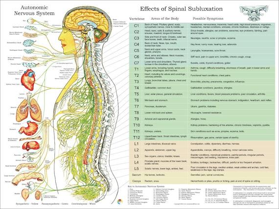 ANS und Auswirkungen der Wirbelsäule Subluxation Poster 18 | Etsy