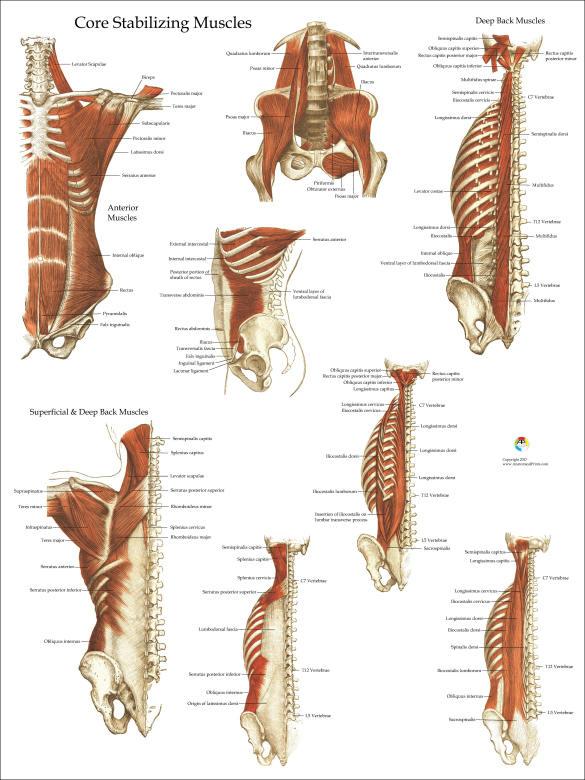 Tief und Kern stabilisierende Muskeln Anatomie Poster 18 | Etsy