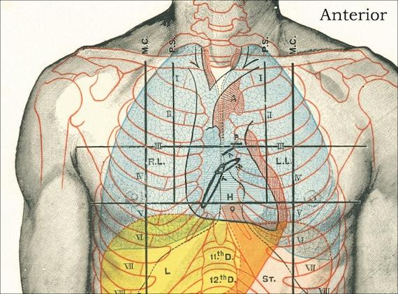 Oberfläche Anatomie medizinische Massage Poster 18 X | Etsy