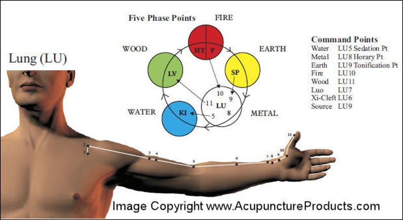 Chinese Acupuncture Meridian Points and Pathways Poster 24
