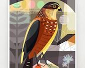 New Zealand, native, Karearea, print, NZA19