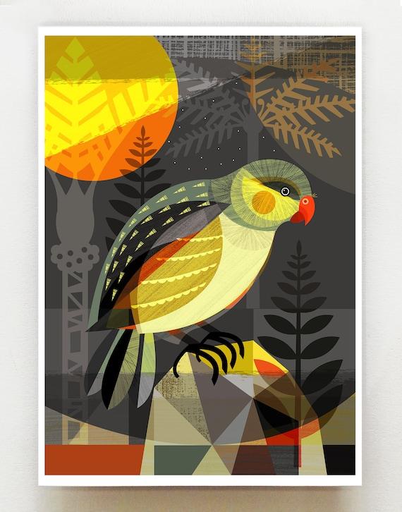 New Zealand Kakapo, print, NZA76