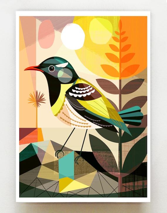 New Zealand native Hihi, print, NZA138