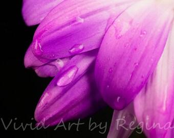 Dripping Daisy Photo Print | Fine Art Photography | Flower Photography | Wall Art