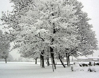 Pack of 5 Christmas Cards 'Christmas Tree' Winter Snow Scene, Holidays, Xmas Pack Set, Corporate Christmas Cards, Christmas Photography