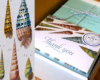 Seashell Thank You Cards - Set of 8 with Envelopes