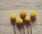 mustard yellow decor, botanical art print, rustic home decor, craspedias, floral nursery art, autumn decor, earth tones,fine art photo
