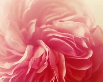 Cottage chic decor, pink flower art, romantic art, floral nursery art, girls decor, shabby rose art, fine art print, pastel pink decor