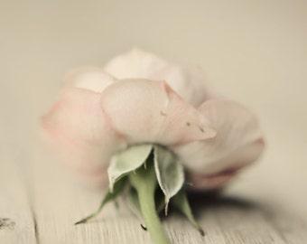 rose art print, pale pink decor, spring decor, pastel nursery art, floral nursery art, pastel decor, pink flower art, romantic floral decor