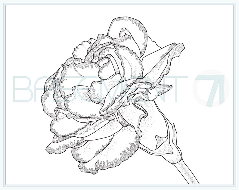Carnation Coloring Page Printable Flower Adult Colouring Etsy