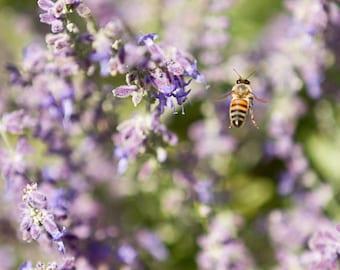 Biene Photographie, Lila Blume, Print, Natur Kunst, Mädchen Schlafzimmer  Kunst, Lila Wand Dekor, Biene Blumen Kunst Im Garten