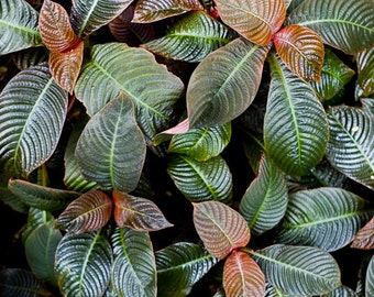 Leaf Photography, Abstract Nature Art, Green Wall Art, Nature Photography, Modern Nature Art, Tropical Art, Garden Prints, Leaf Patterns 3