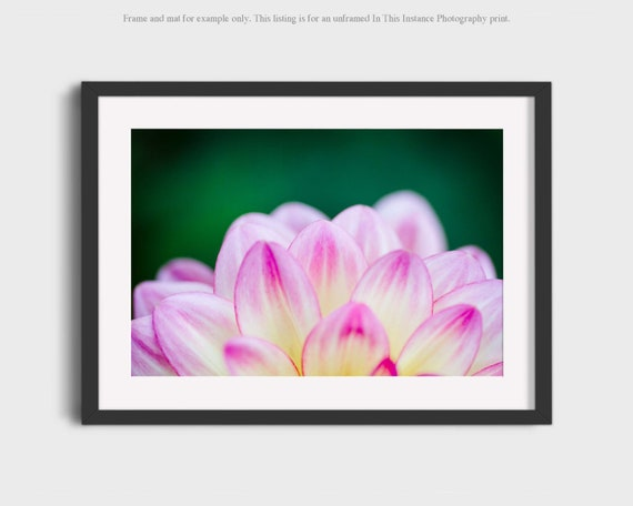 Flower Photography Abstract Garden Dahlias Pink Green Floral Etsy