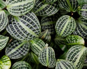 Leaf Photography, Abstract Botanical Art, Green Wall Art, Nature Print, Modern Nature Art, Tropical Art, Garden Prints, Leaf Patterns 2