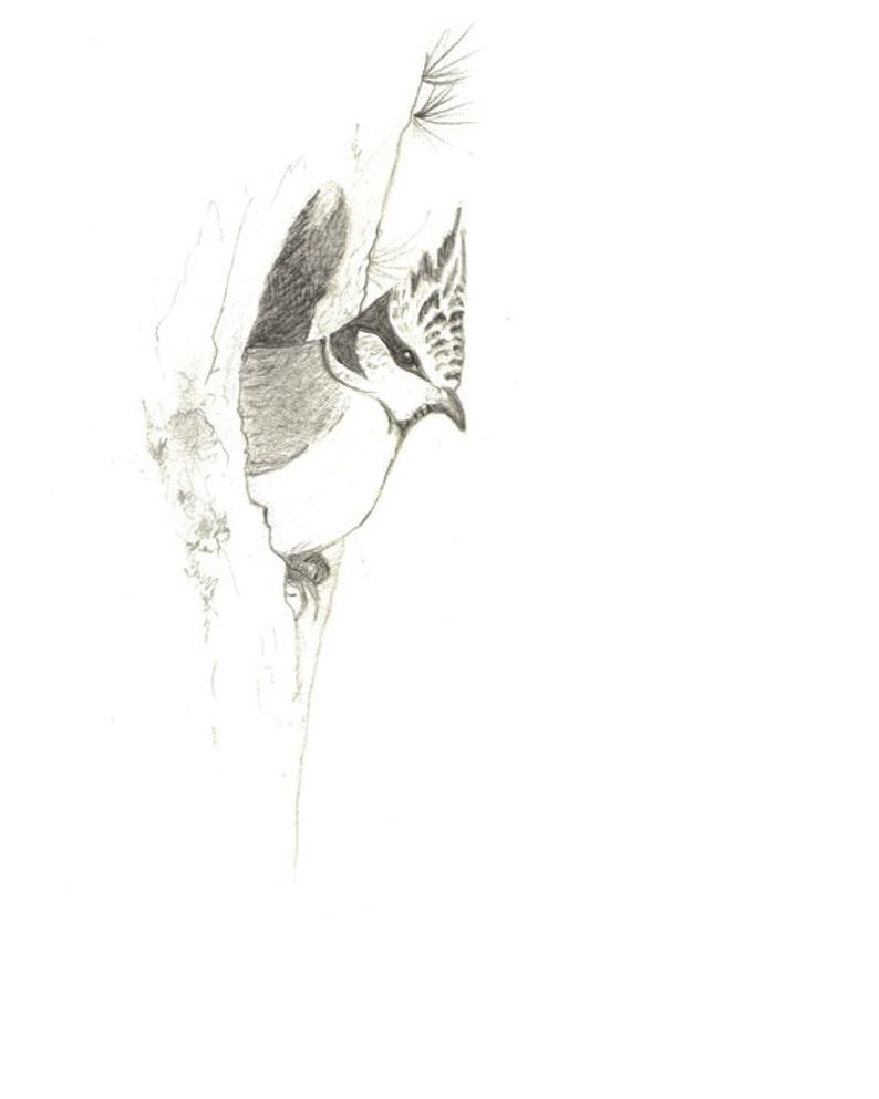Originale Disegno Uccelli Animali Selvatici Carte Uccelli Etsy